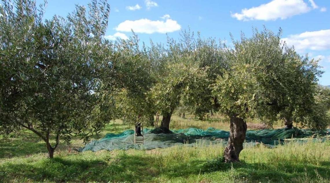 Quando l'olio extra vergine di oliva incontra il turismo, il matrimonio s'ha da fare