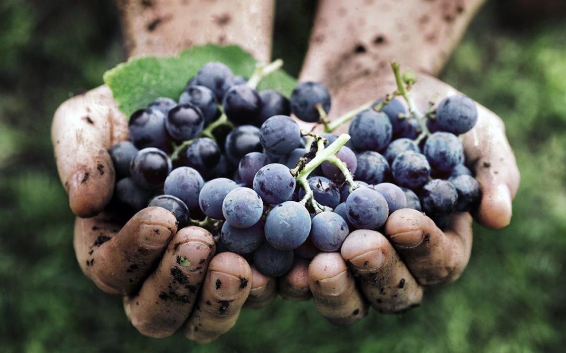 La naturalità è vincente anche nel mercato del vino