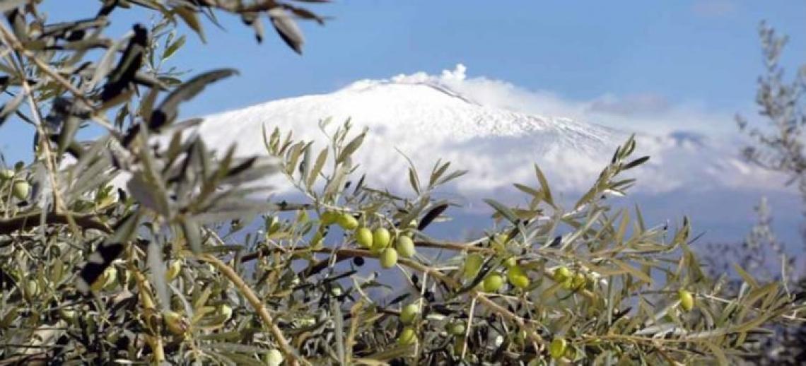 Sirena d'Oro, a Catania le selezioni per il miglior olio della Sicilia
