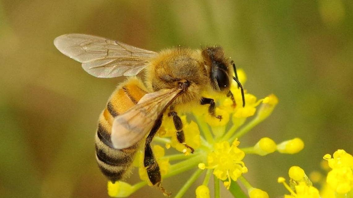La grande famiglia matriarcale delle api