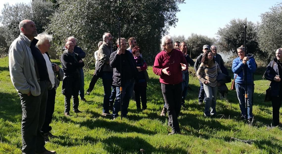 Nella potatura degli olivi monumentali rispettare la dignità della pianta
