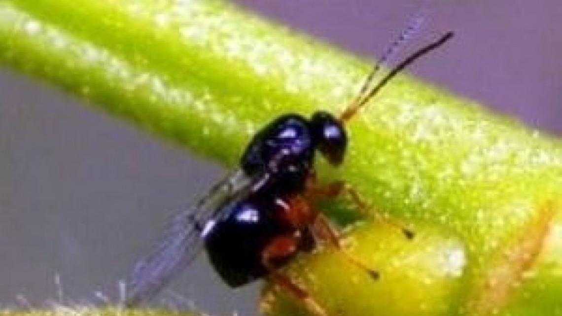 Le fitopatie causano un danno economico mondiale da 220 miliardi di dollari