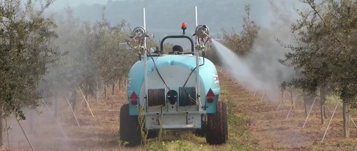 Gli elementi minerali dimenticati: l'importanza dei micronutrienti per l'olivo