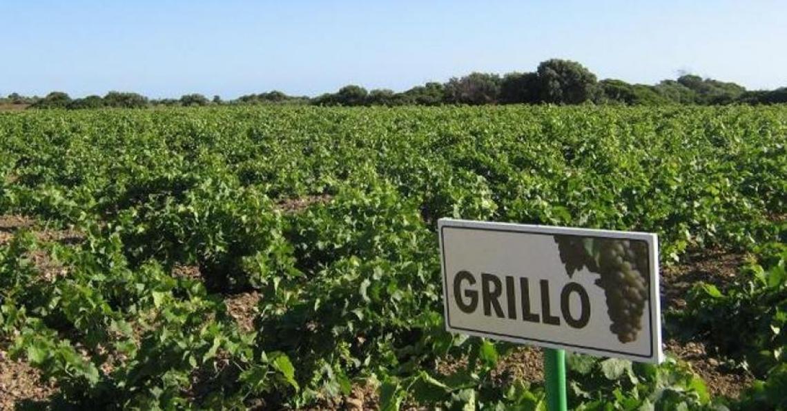 La Sicilia del vino piace in Italia, Germania e Stati Uniti