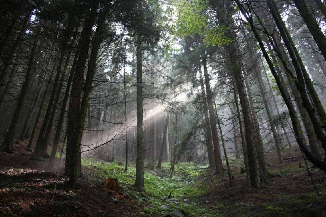 I boschi italiani danno lavoro a 400 mila persone