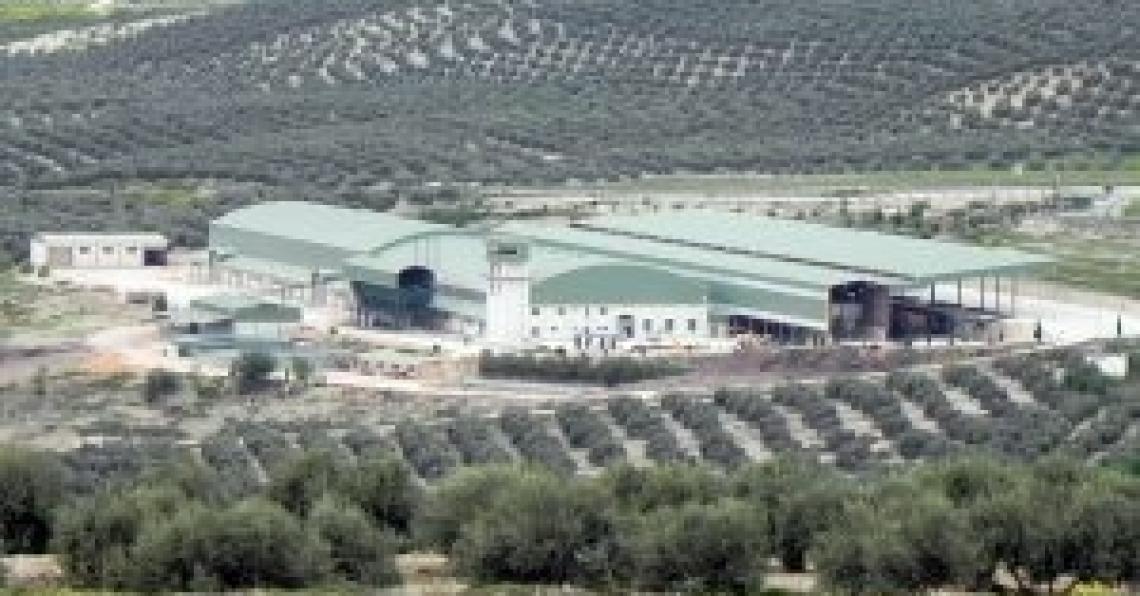 Jaen produce più olio d'oliva di Italia, Grecia, Portogallo e Marocco