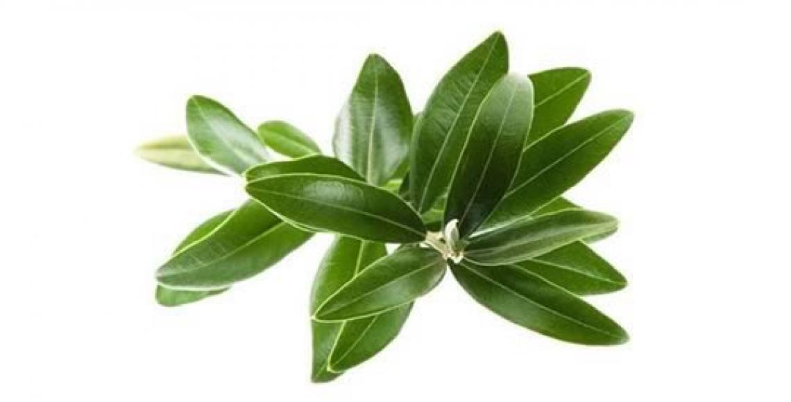 Dagli scarti dell'olio d'oliva novità per l'industria alimentare e farmaceutica