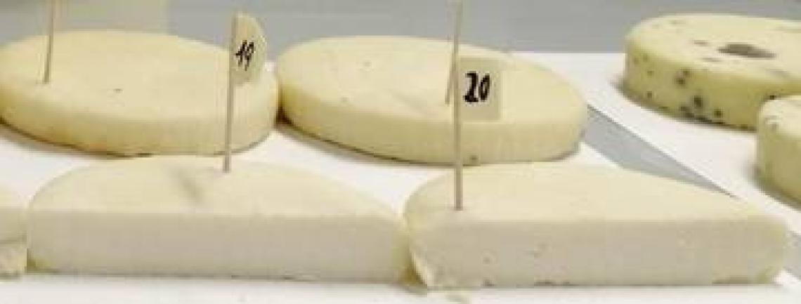 Nei formaggi trentini batteri autoctoni antistress