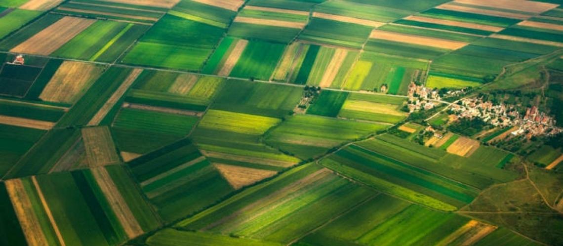 Il peso dell'agricoltura sull'intera economia è al 2,1%
