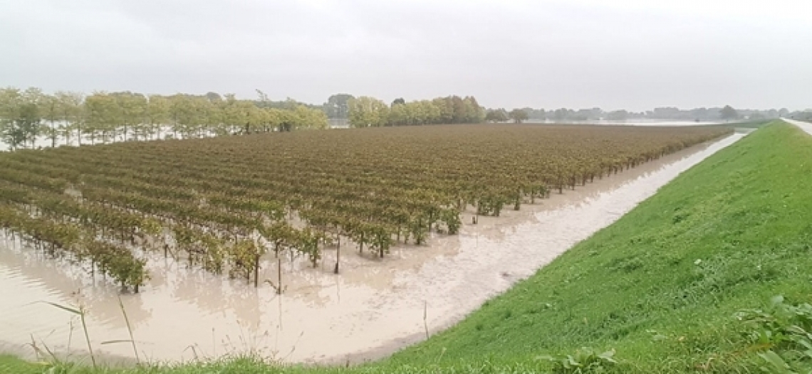 Il Veneto agricolo messo in ginocchio dal maltempo