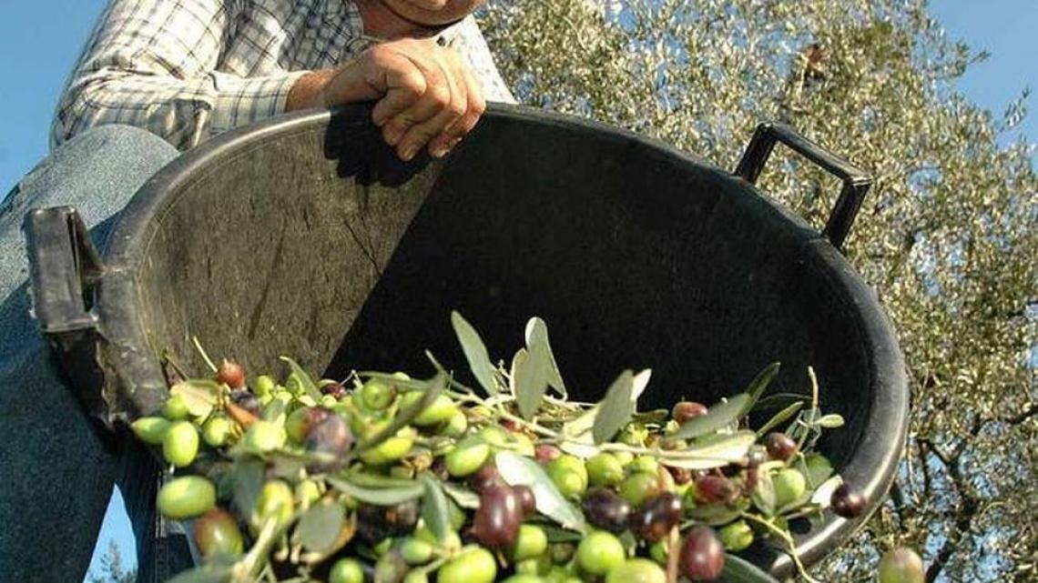 Ritorna il premio letterario sull'olivo e l'olio dedicato a Ranieri Filo della Torre