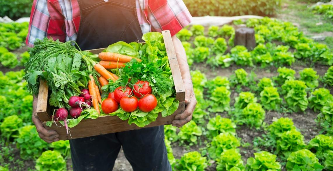 L'agricoltura biologica è il futuro per l'Italia: Centinaio dixit