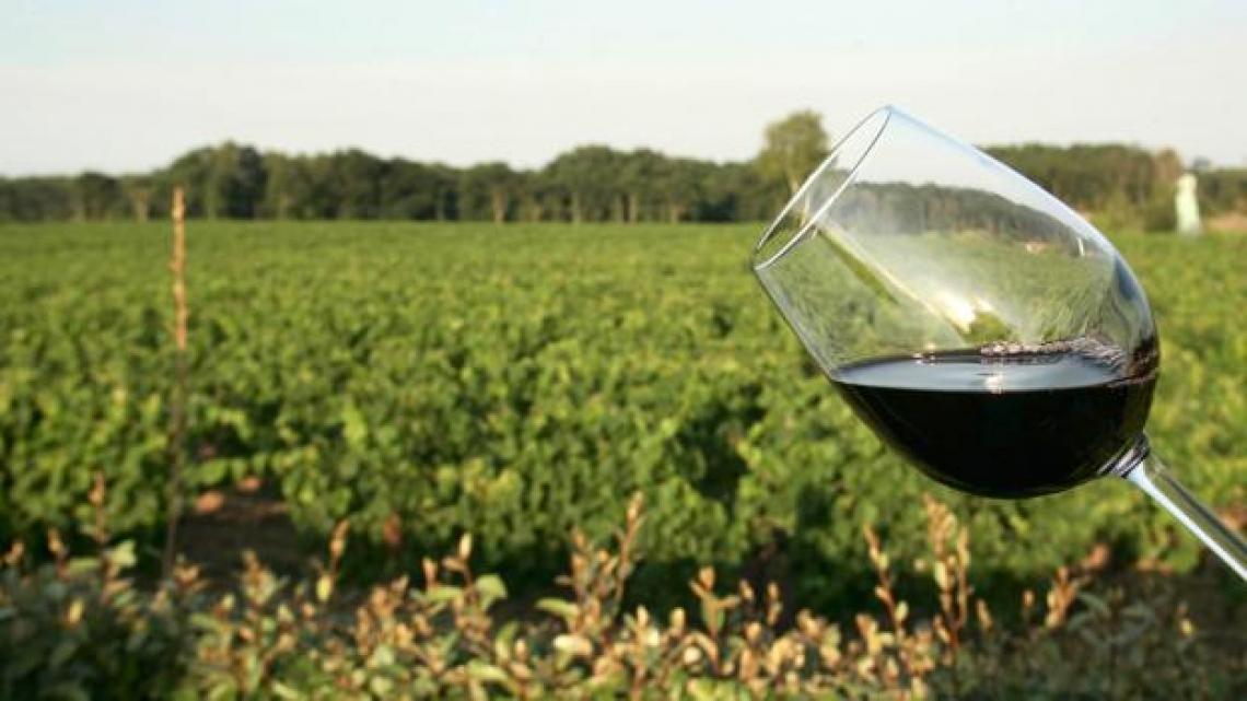 Il sentore verde del vino, tra vitigno e vinificazione