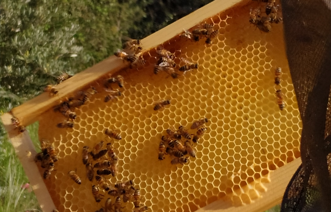 Essere più umani, imparando ad amare le api, anche in città