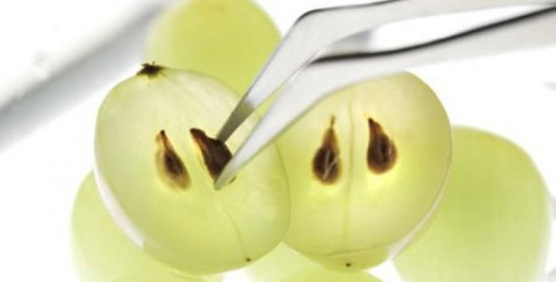 Un nuovo carburante dai vinaccioli dell'uva