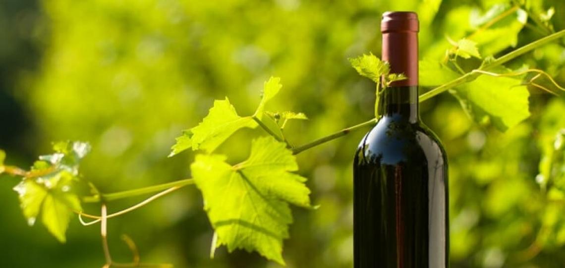 Il vino biologico conquista i cuori dei consumatori: uomini e donne stregati in maniera diversa