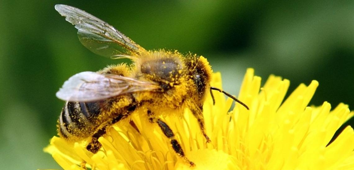 120 milioni di euro per sostenere l'apicoltura europea
