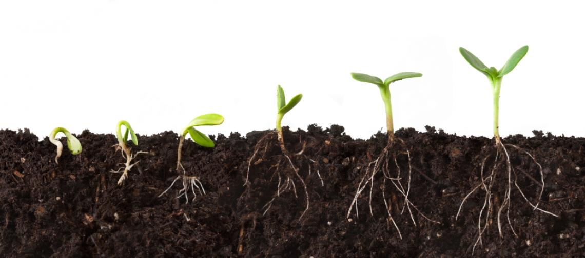 I microrganismi del suolo alleati degli agricoltori