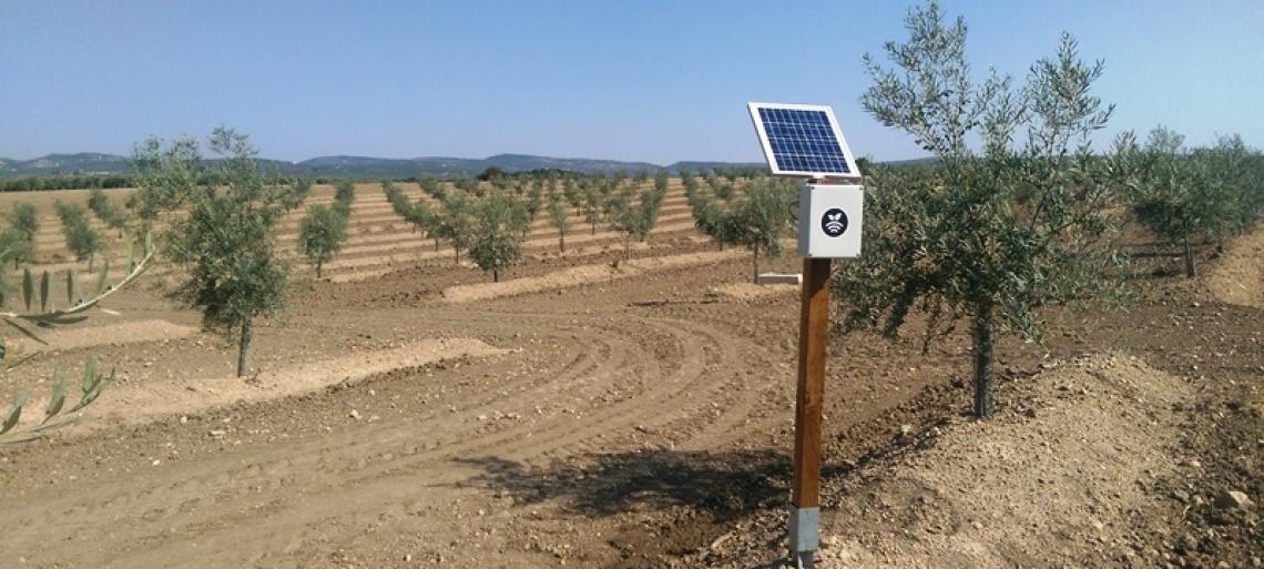 Dare l'acqua al momento giusto per aumentare la produttività dell'oliveto