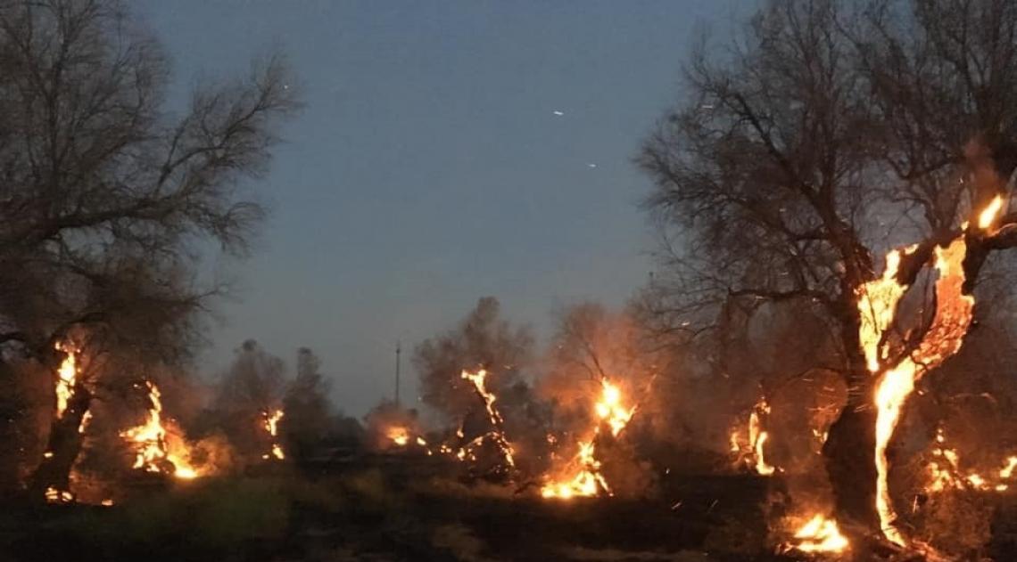Ora gli oliveti colpiti da Xylella vanno a fuoco