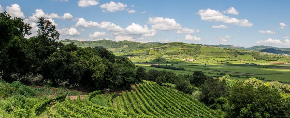 Stop alle nuove vigne in Valpolicella per tre anni