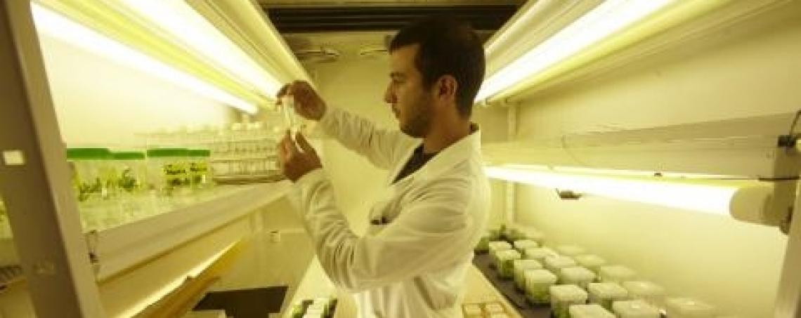Più qualità e sostenibilità irrigando l'olivo con acque saline