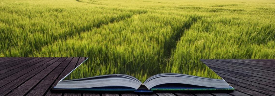 Se il frutto dell'agricoltura diventa una merce viene meno il senso della Costituzione