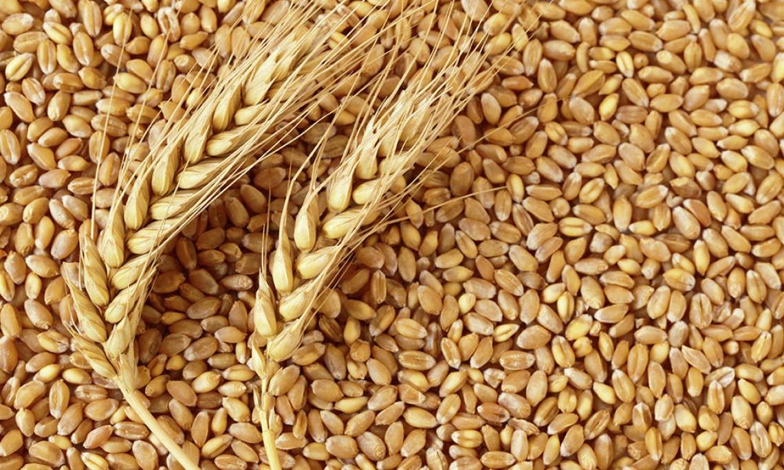 Mercato e prospettive per i cereali italiani