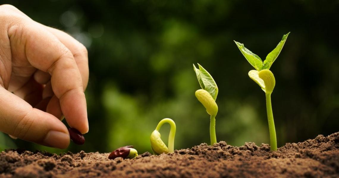 Il biologico tra presente e futuro, dalla ricerca al campo