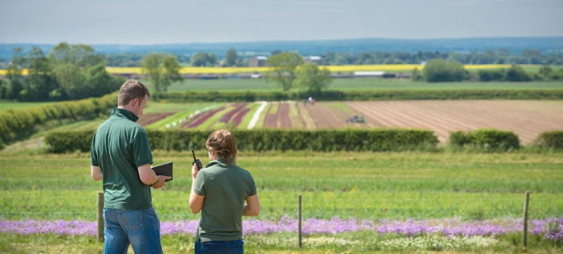 Agricoltura in chiaroscuro: diminuiscono imprese ma aumenta il valore aggiunto