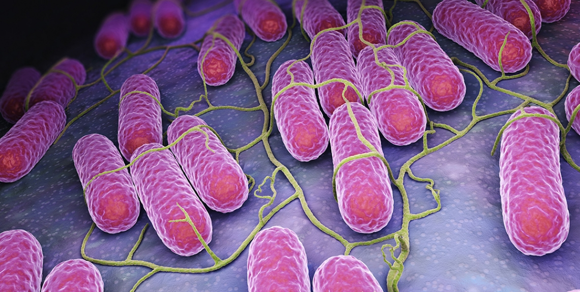 L'importanza dell'equilibrio del microbioma per far felice l'intestino