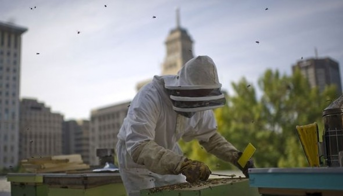 Oltre l'ambientalismo, l'apicoltura urbana è salute per le città