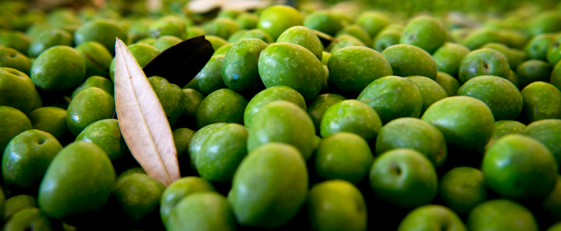 E' tempo di raccolta delle olive, anzi no, è tempo di social