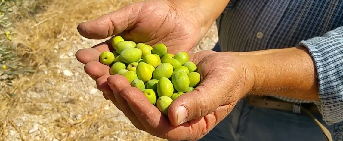 L'importanza della creatività nella ricerca olivicolo-olearia italiana