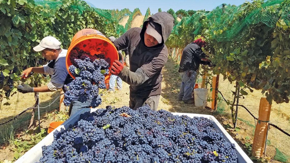 Torna nella media la produzione mondiale di vino