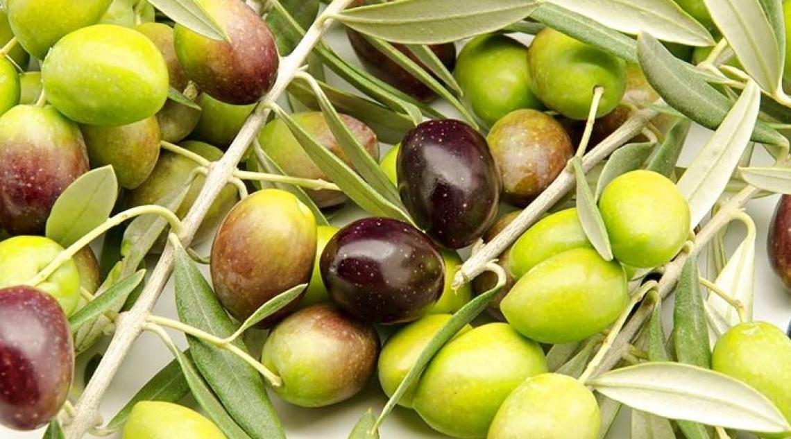 E' allarme prezzi per l'olio extra vergine di oliva italiano