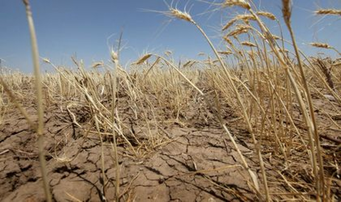 Scoperto il segreto della resistenza alla siccità delle piante