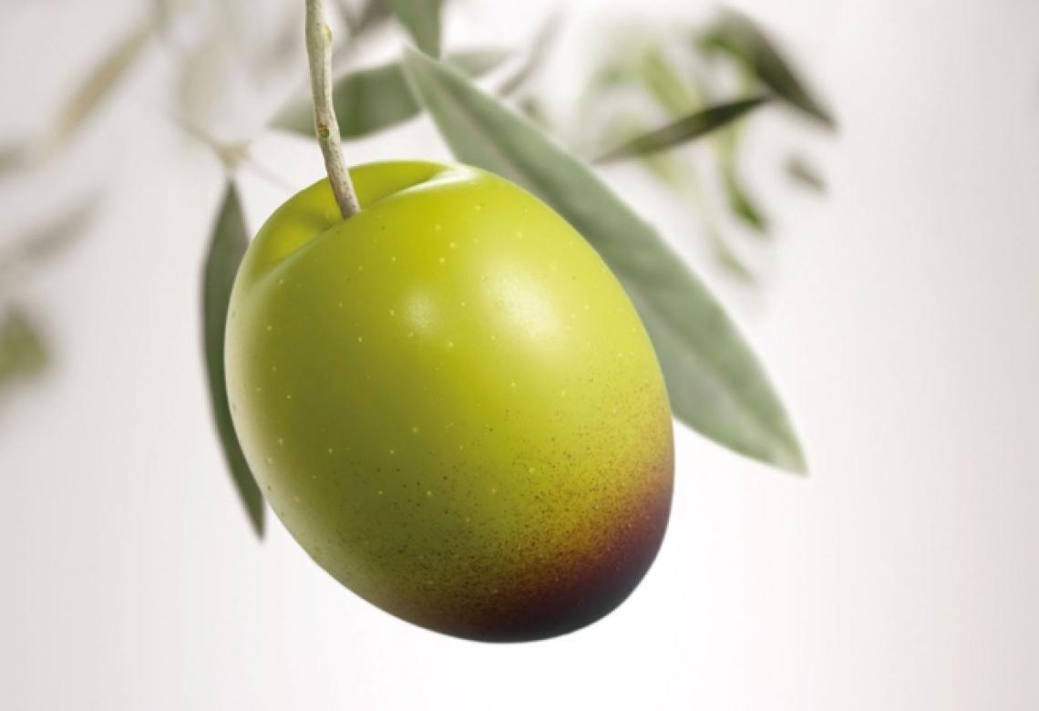 Identificato il gene coinvolto nella sintesi dell'idrossitirosolo dell'olio d'oliva