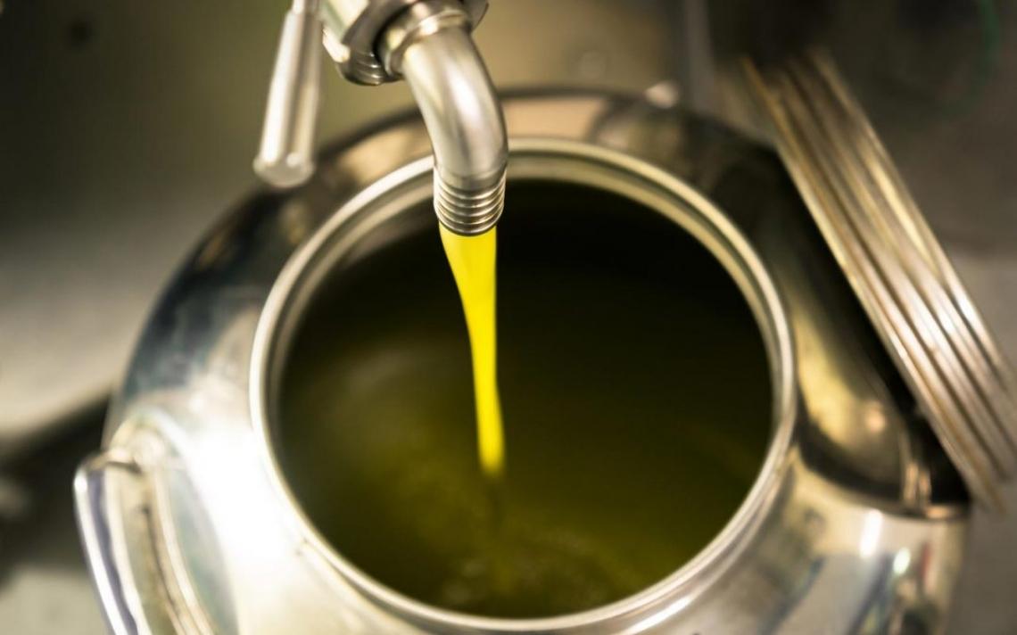 L'influenza della temperatura di raccolta delle olive sulle caratteristiche organolettiche dell'olio extra vergine di oliva