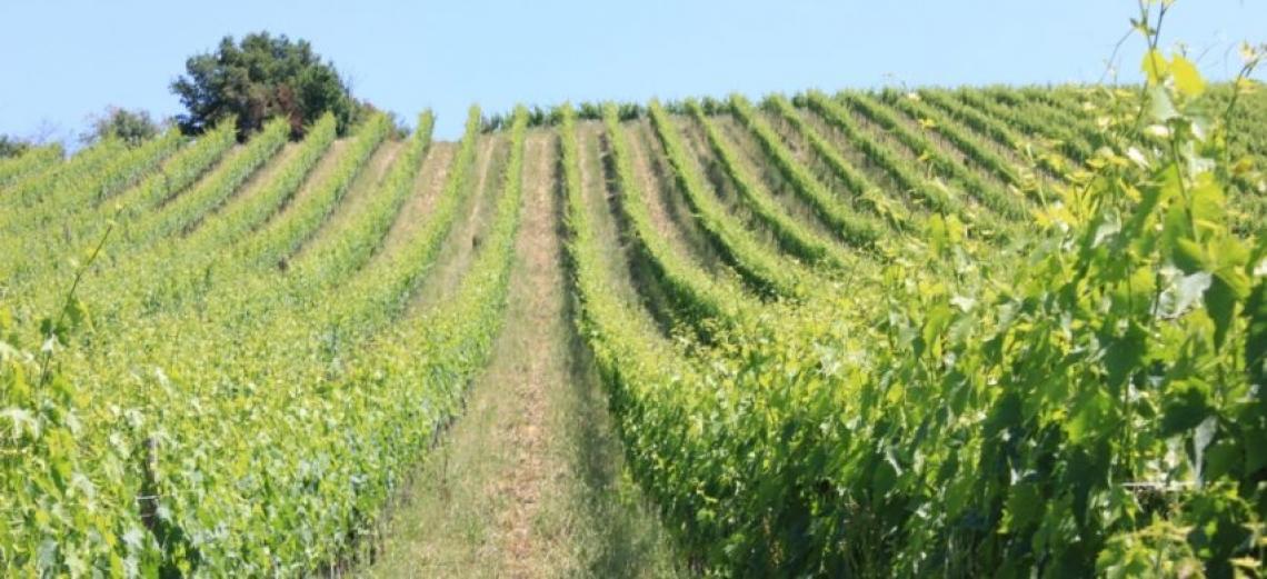 Il progetto Proinos per tutela delle risorse idriche e innovazione in viticoltura