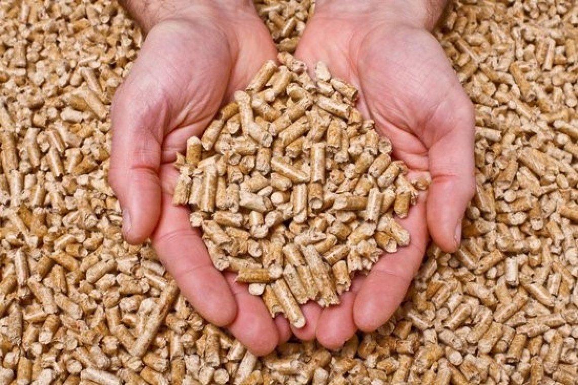 Le biomasse contribuiscono a ridurre le emissioni di anidride carbonica
