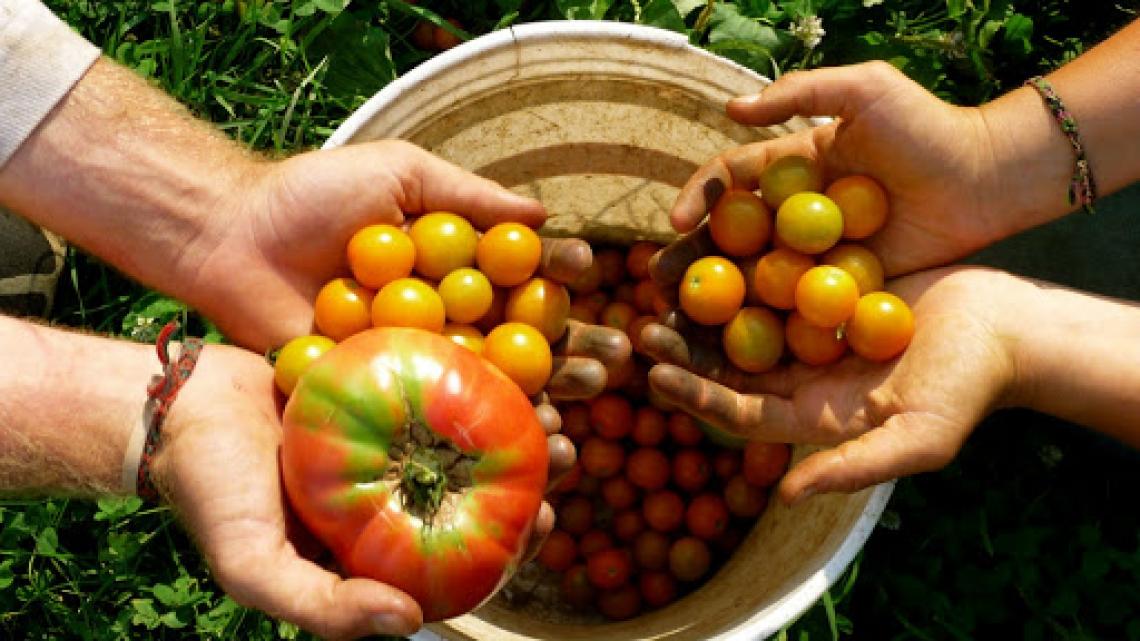 L'agricoltura bio non conosce crisi e continua a crescere