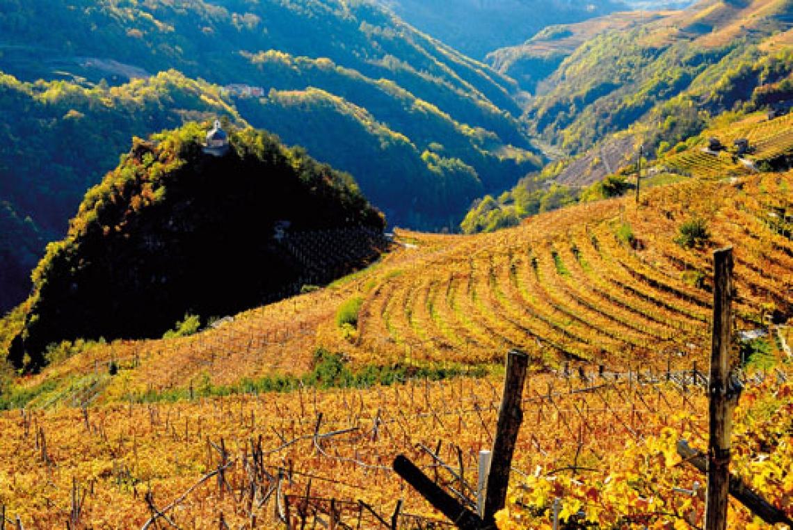 Vignaioli di montagna: tra vino e cinema spazio anche alla gastronomia