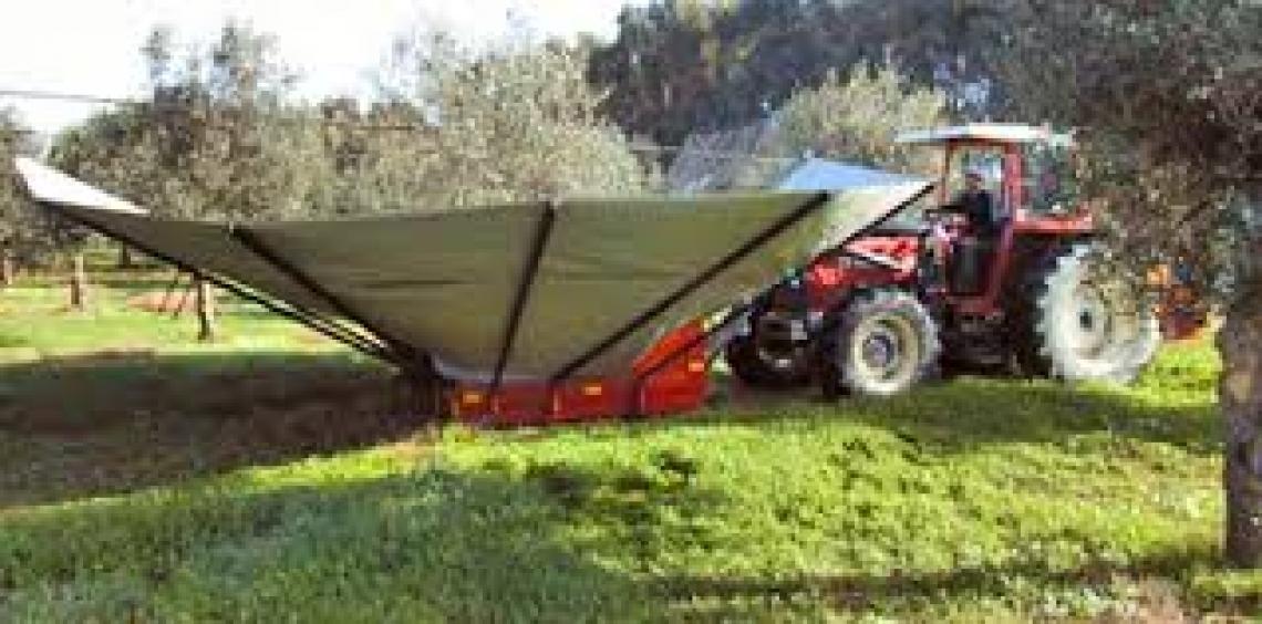 EnoliExpo, un pieno di olivicoltura