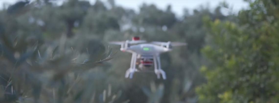 Droni e sensori a sostegno della produzione olivicola in Grecia