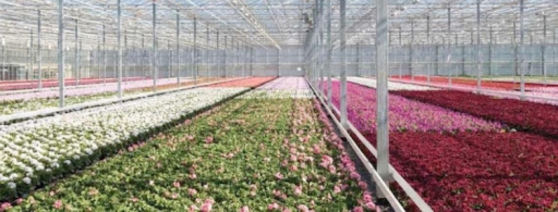 Il settore florovivaistico può continuare a lavorare e vendere