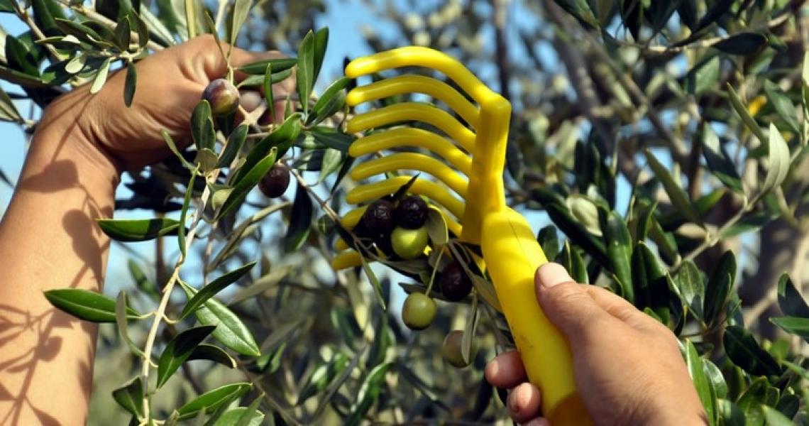 In aumento le vendite di olio extra vergine di oliva italiano, ma non per tutti