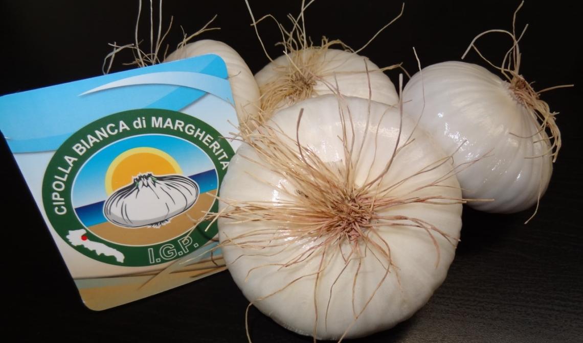 Cipolla Bianca di Margherita Igp: tutto pronto per la raccolta