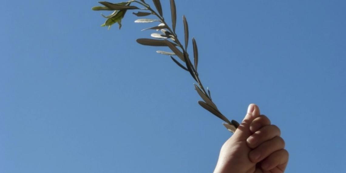 Ascoltare gli olivi per imparare i concetti di pazienza e speranza