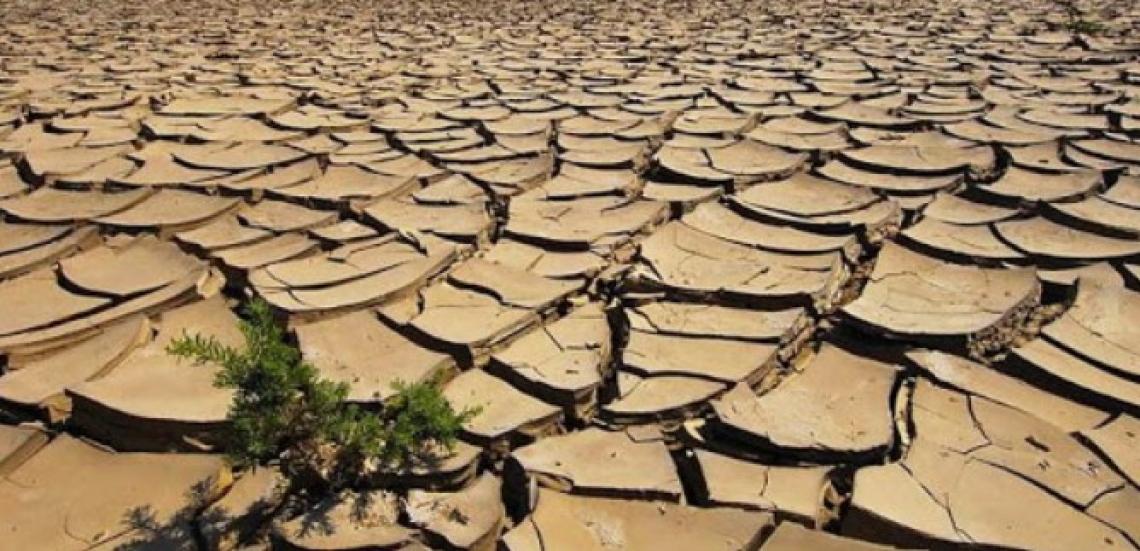 L'utilità delle acque reflue di frantoio sul contenuto di carbonio organico nei suoli aridi